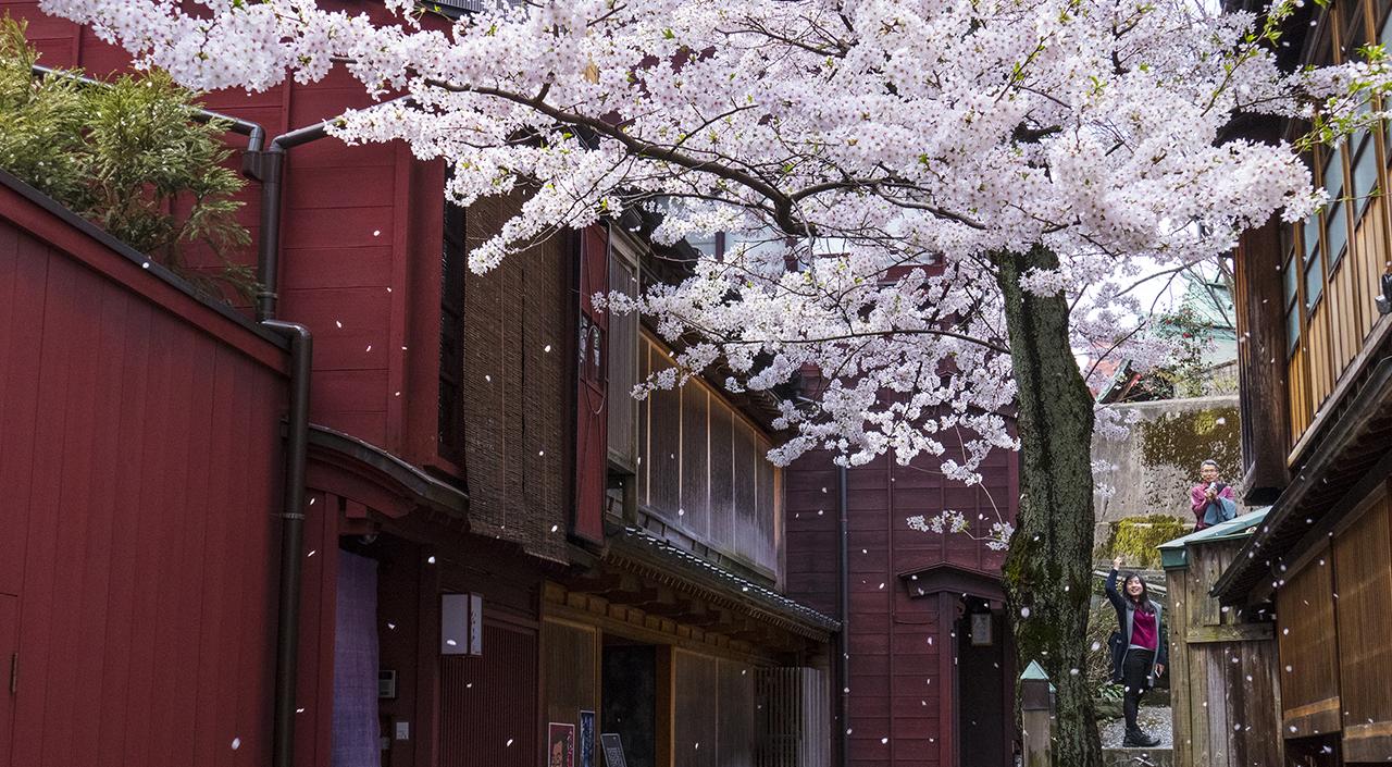 Explore Japan From Nagoya